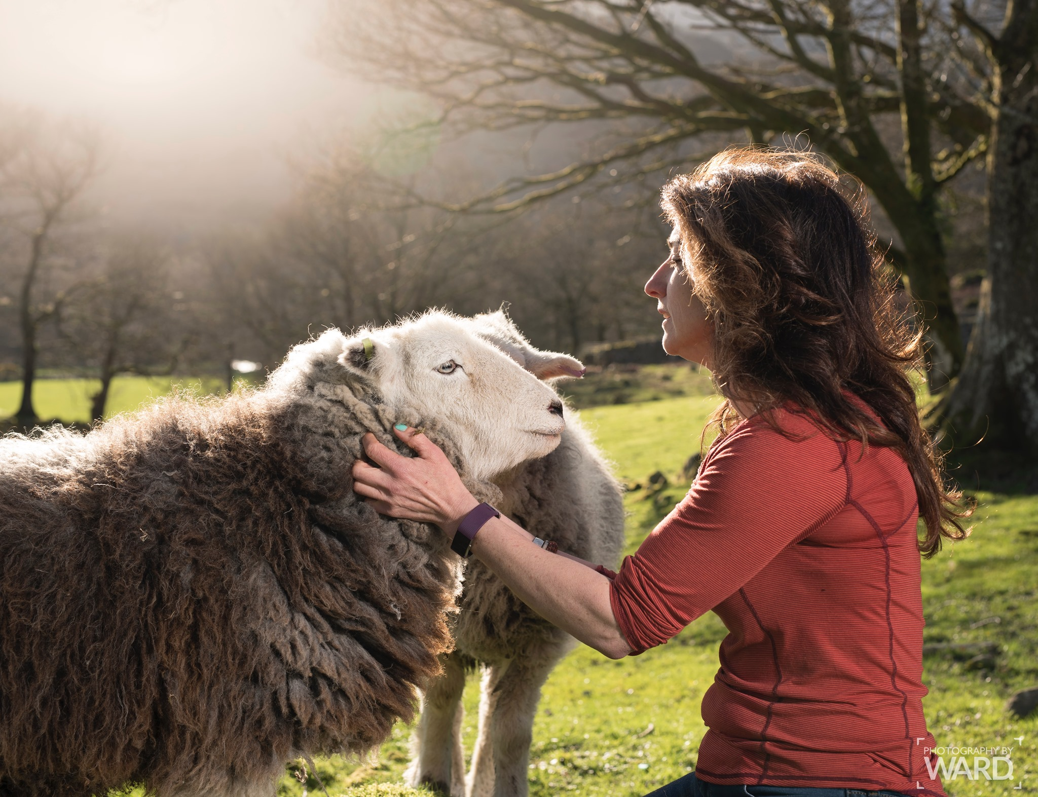 Herdwick Shee with Glasses