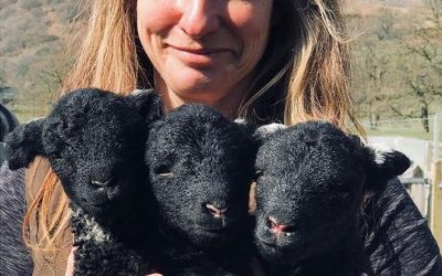 BBC News Feature: Coniston Beatrix Potter farm welcomes 'rare' triplet lambs